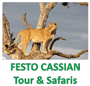 Festo Cassian tours & safaris