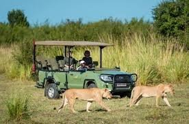 safari in mana pools national park zimbabwe wildlife