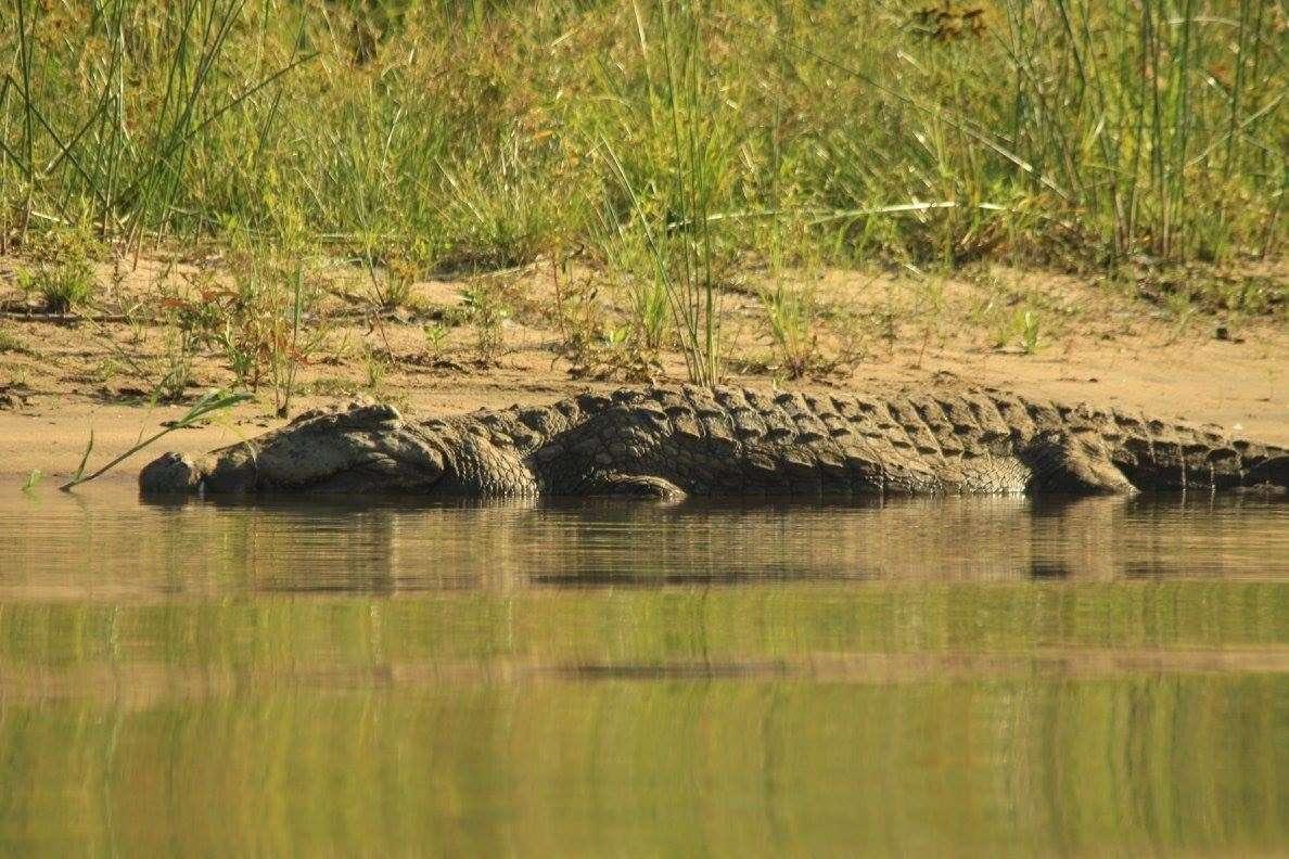 Great Zambesi river zambia highlights (4)