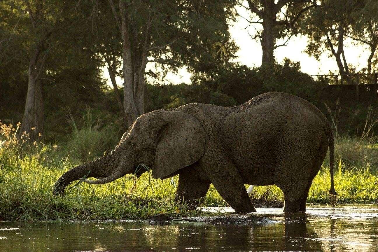 Great Zambesi river zambia highlights (5)