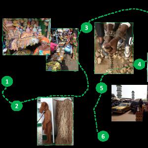 gambia cultural excursion