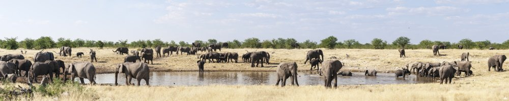 Group of African elephants at a waterhole in Etosha National Park