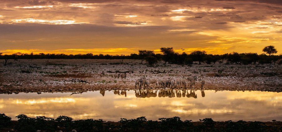 Scenic view of zebras at a waterhole, Etosha National Park, Namibia