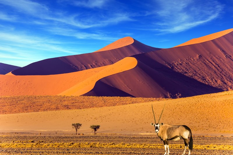 Sunset in most ancient in the world Namib Desert. Oryx standing at the road. Travel to Namibia